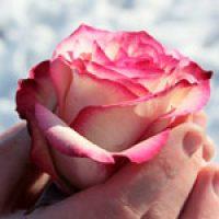 rose_web_150x150